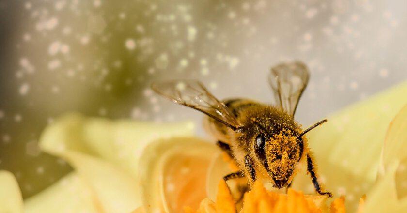 Jej Wysokość Pszczoła